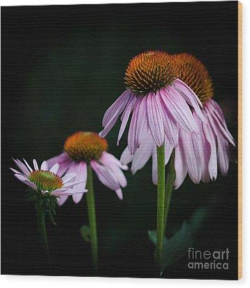 Fresh Echinacea Wood Print by Renee Barnes