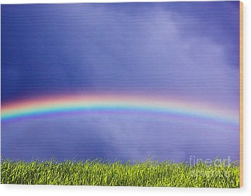 Fresh Grass And Sky With Rainbow Wood Print by Michal Bednarek