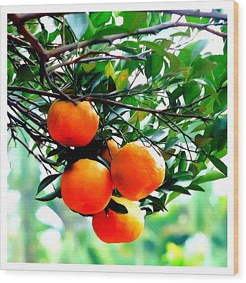 Fresh Orange On Plant Wood Print by Lanjee Chee