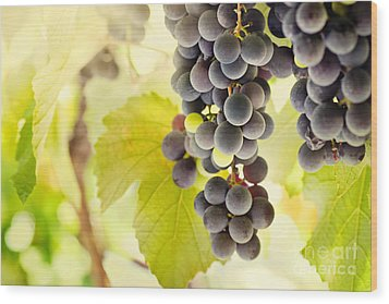 Fresh Ripe Grapes Wood Print by Mythja  Photography
