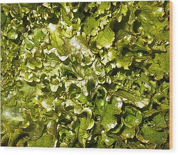 Fresh Romaine Wood Print by Sherry Dooley