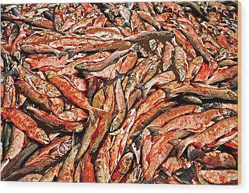 Freshly Catched Salmons At The Nenana River - Ak Wood Print by Juergen Weiss
