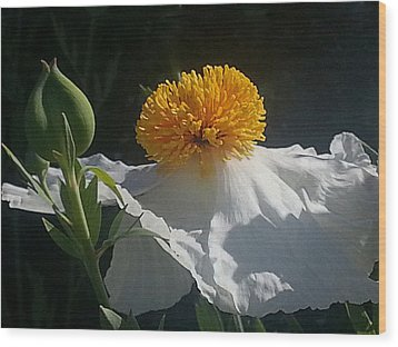 Fried Egg Poppies In The Air Wood Print