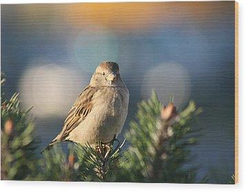 Friendly Bird Wood Print by Paula Brown