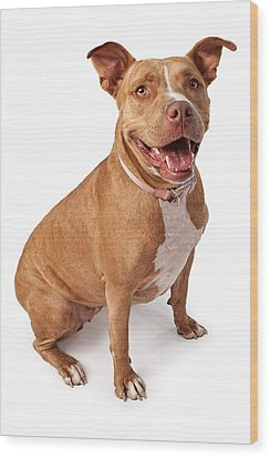 Friendly Pit Bull Wood Print by Susan Schmitz
