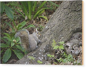 Wood Print featuring the photograph Friendly Squirrel by Marilyn Wilson