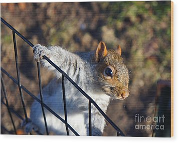 Wood Print featuring the photograph Friendly Squirrel by Rafael Quirindongo