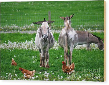 Friends Wood Print by Dawn  De Vos