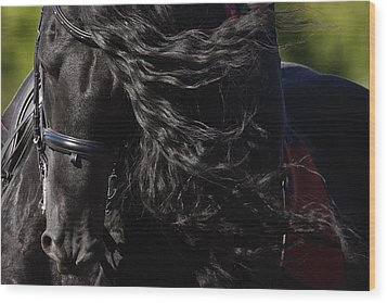Friesian Beauty Wood Print by Wes and Dotty Weber