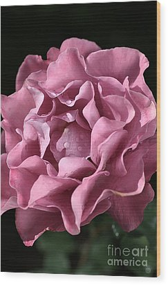 Frilly Rose Wood Print by Joy Watson