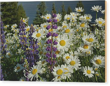Frisco Flowers Wood Print by Lynn Bauer