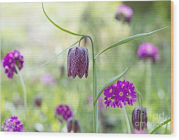Fritillary And Primula  Wood Print by Tim Gainey