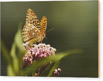 Fritillary Butterfly On Pink Milkweed Flower Wood Print by Christina Rollo