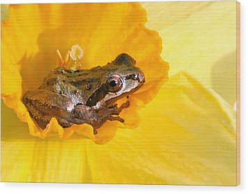 Frog And Daffodil Wood Print by Jean Noren