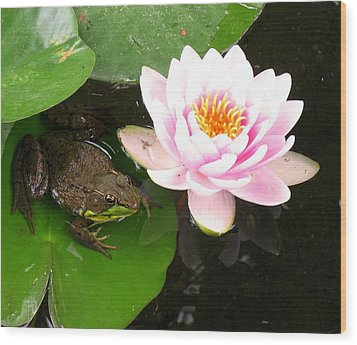 Frog And Lily Wood Print by Debbie Finley