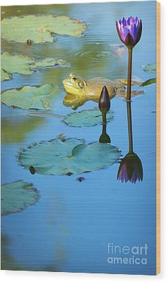 Wood Print featuring the photograph Frog And Lily by Ellen Cotton