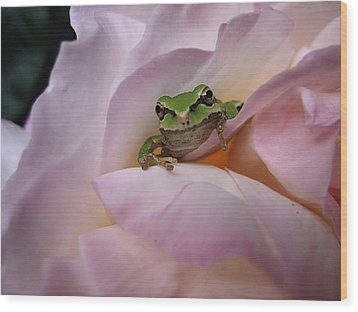 Frog And Rose Photo 1 Wood Print by Cheryl Hoyle