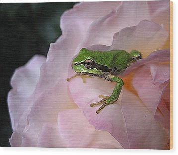 Frog And Rose Photo 3 Wood Print by Cheryl Hoyle