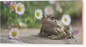 Frog And The Daisy  Wood Print by Tim Gainey