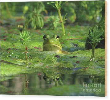 Frog Wood Print by Douglas Stucky