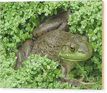 Frog Wood Print by DejaVu Designs