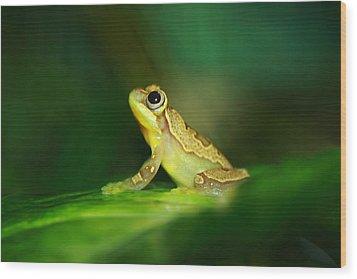 Frog Dreams Wood Print by Paul Slebodnick