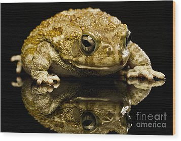 Wood Print featuring the photograph Frog by Gunnar Orn Arnason
