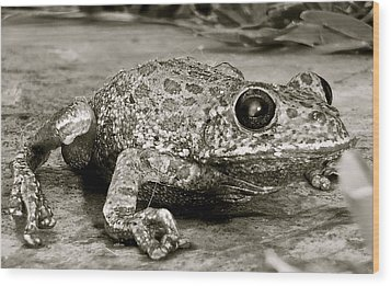 Frog Hair Wood Print by Kim Pippinger