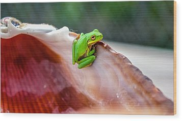 Wood Print featuring the photograph Frog In A Cockle by Rob Sellers