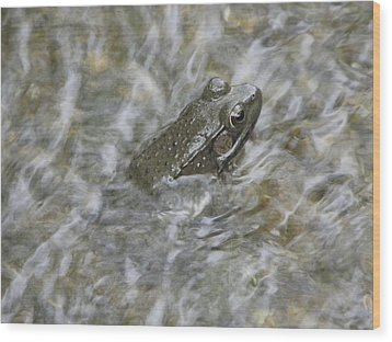 Frog In Rippling Water Wood Print by Cim Paddock