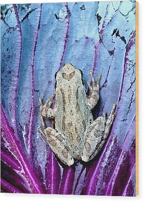 Frog On Cabbage Wood Print by Jean Noren