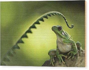 Frog On Green Background Wood Print by Dirk Ercken
