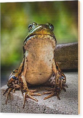 Frog Prince Or So He Thinks Wood Print by Bob Orsillo