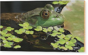 Frog Reflection Wood Print by Barbara S Nickerson
