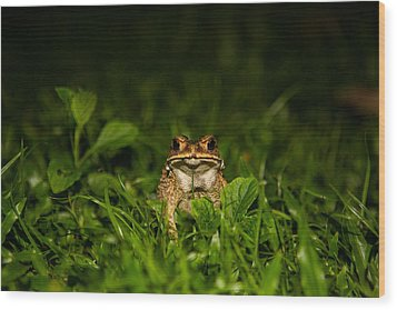 Frog Stare Wood Print by Mike Lee