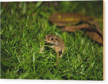 Froggie Wood Print by Mike Lee