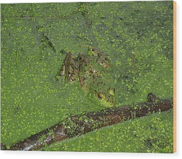 Wood Print featuring the photograph Froggie by Robert Nickologianis