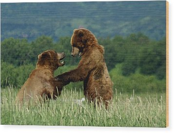 Frolicking Grizzly Bears Wood Print by Patricia Twardzik