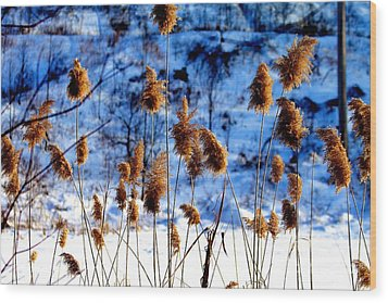 Fronds In Winter Wood Print by Eleanor Abramson