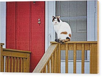 Front Porch Cat Wood Print