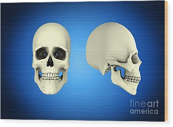 Front View And Side View Of Human Skull Wood Print by Stocktrek Images