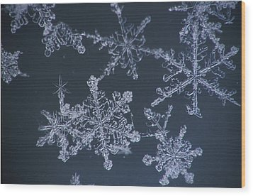 Frost Crystal On Glass Kodiak Isl Wood Print by Marion Owen