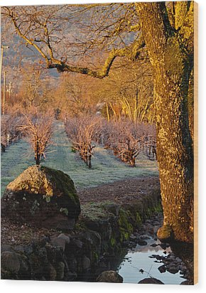 Frost In The Valley Of The Moon Wood Print by Bill Gallagher