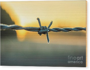 Frost On Barbed Wire At Sunrise Wood Print