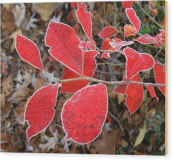 Wood Print featuring the photograph Frosted Blueberry Leaves by William Tanneberger
