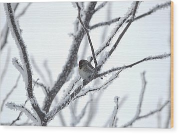 Wood Print featuring the photograph Frosted Branches by Dacia Doroff