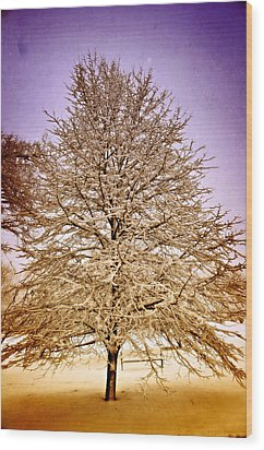 Frosted Branches Wood Print by Marty Koch