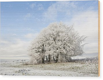 Frosted Copse Wood Print by Anne Gilbert