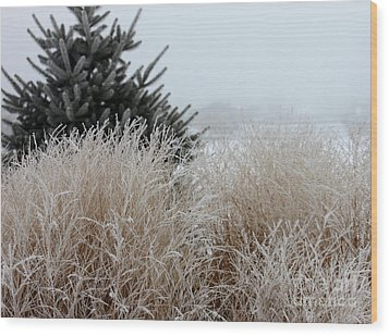 Frosted Grasses Wood Print by Debbie Hart
