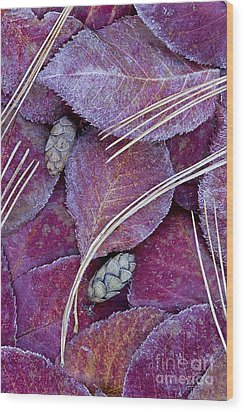 Frosted Leaves Wood Print by Alan L Graham